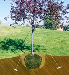 Укрепление деревьев с помощью грунтовых анкеров Манта Рей